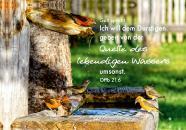 Bild mit Jahreslosung 2018, 60 x 40 x 3,5 cm, Design Vögel
